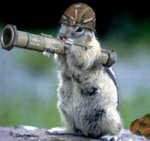 army_squirrel